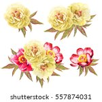 Yellow And Red Peonies Flower...