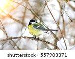 Wild Bird Eats Cold Winter ...