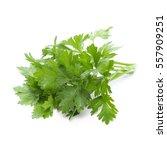 fresh leaf parsley | Shutterstock . vector #557909251