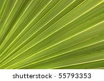 Green Palm Leaf Close Up For A...