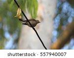 small cute bird taking rest | Shutterstock . vector #557940007