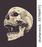 anatomic grunge skull vector... | Shutterstock .eps vector #557984971