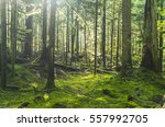 green forest with sunrays on... | Shutterstock . vector #557992705