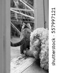 Small photo of Dog and cat at an open door on wooden threshold.
