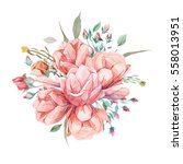 watercolor romantic bouquet of... | Shutterstock . vector #558013951
