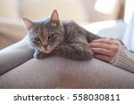 furry tabby cat lying on its... | Shutterstock . vector #558030811