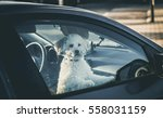 sad dog left in car.cute toy... | Shutterstock . vector #558031159