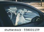 Sad Dog Left In Car.cute Toy...