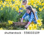 Little Girl Is In A Daffodil...