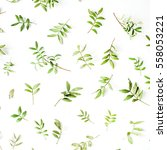 green branches and leaves on... | Shutterstock . vector #558053221