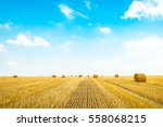 hay bale. agriculture field... | Shutterstock . vector #558068215