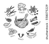 set of hand drawn vector spices ... | Shutterstock .eps vector #558075229