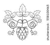 illustration of hops for brewing | Shutterstock .eps vector #558100465