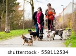 Stock photo dog sitters walking their customers 558112534