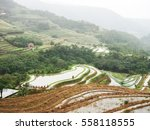 rice field terraces  rice paddy  | Shutterstock . vector #558118555