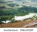 rice field terraces  rice paddy  | Shutterstock . vector #558135289