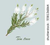 Tea Tree Blossoming Twig....