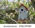 kohlmeise  bird  at nesting box | Shutterstock . vector #558159985