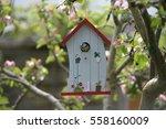 Kohlmeise  bird  at nesting box