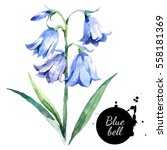 Hand Drawn Watercolor Bluebell...