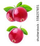 isolated cranberries. two... | Shutterstock . vector #558257851