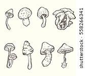 set of hand drawn vector... | Shutterstock .eps vector #558266341