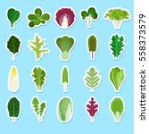 cartoon green salad leaves... | Shutterstock .eps vector #558373579