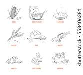 doodle cereals groats  porridge ... | Shutterstock .eps vector #558406381