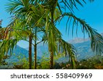 tropical forest | Shutterstock . vector #558409969