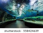Small photo of MANILA, PHILIPPINES - MARCH 18: Underwater tunnel on March, 18, 2013, Manila, Philippines. In terms of floor space, oceanarium is larger than oceanarium in Singapore, features a 25-metre tunnel.