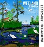 vector wetland ecosystem...   Shutterstock .eps vector #558428995