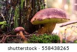 beautiful mushrooms | Shutterstock . vector #558438265