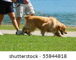 Stock photo a mature couple walking the dog in the park on a sunny day 55844818