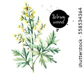 hand drawn watercolor wormwood... | Shutterstock . vector #558534364