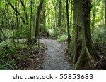 Lush Green Dense Tropical Forest