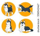 siberian husky set a   Shutterstock .eps vector #558542467
