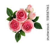 pink rose flowers arrangement... | Shutterstock . vector #558587461