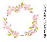sakura cherry blossom round... | Shutterstock .eps vector #558596281