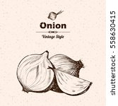 vector background with onion  . ... | Shutterstock .eps vector #558630415