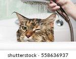 Stock photo funny cat wet cat 558636937
