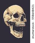 anatomic grunge skull vector... | Shutterstock .eps vector #558648421