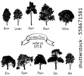 vector set of deciduous trees ... | Shutterstock .eps vector #558671581
