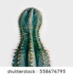 cactus   | Shutterstock . vector #558676795