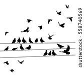 silhouette birds  pigeons... | Shutterstock .eps vector #558740569