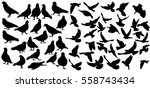 vector set of silhouette birds  ... | Shutterstock .eps vector #558743434