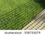Half Of Stone Walkway And Grass