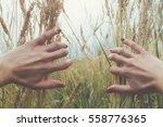 hands in a wheat field. | Shutterstock . vector #558776365