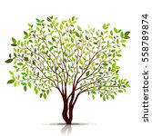 green tree with leaves on white ... | Shutterstock .eps vector #558789874