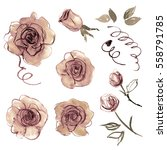 cute watercolor hand painted... | Shutterstock . vector #558791785