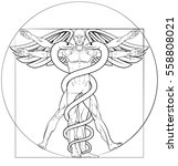 caduceus medical symbol... | Shutterstock .eps vector #558808021